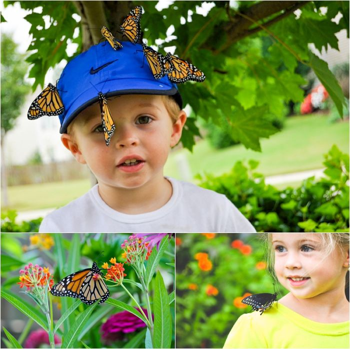Gardening With Kids: Butterfly Friendly Plants That