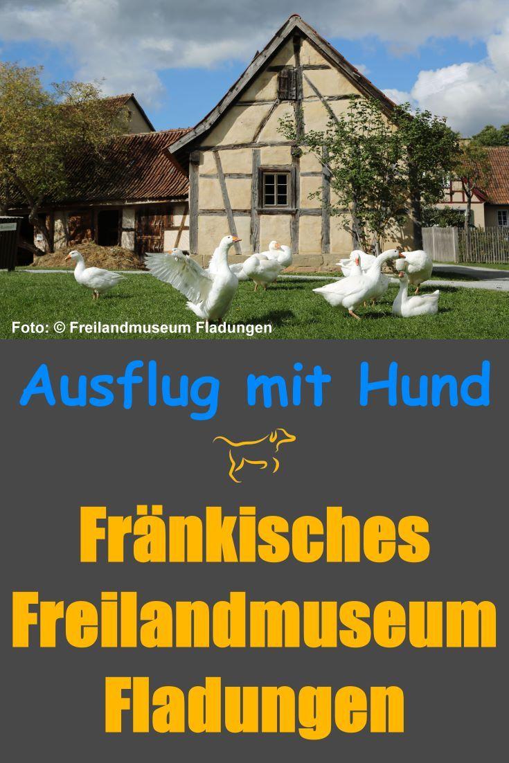 Ausflugsziele Mit Hund Hessen