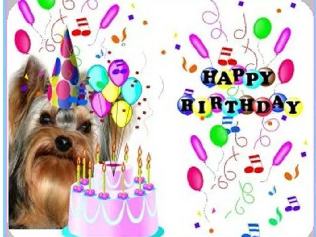 Yorkie happy birthday Happy Birthday Pinterest Happy