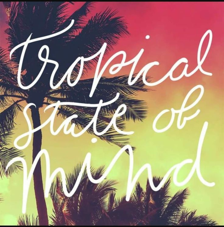 Tropical State of Mind   Summer quotes, Beach captions ...