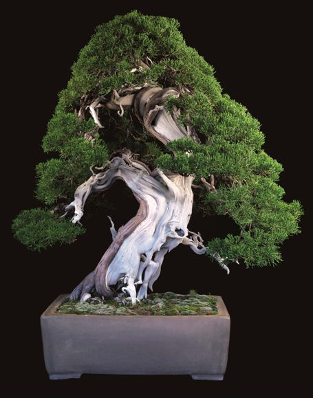 Bonsai Art | with a glossy slipcase; the deluxe edition of Fine Bonsai: Art ...