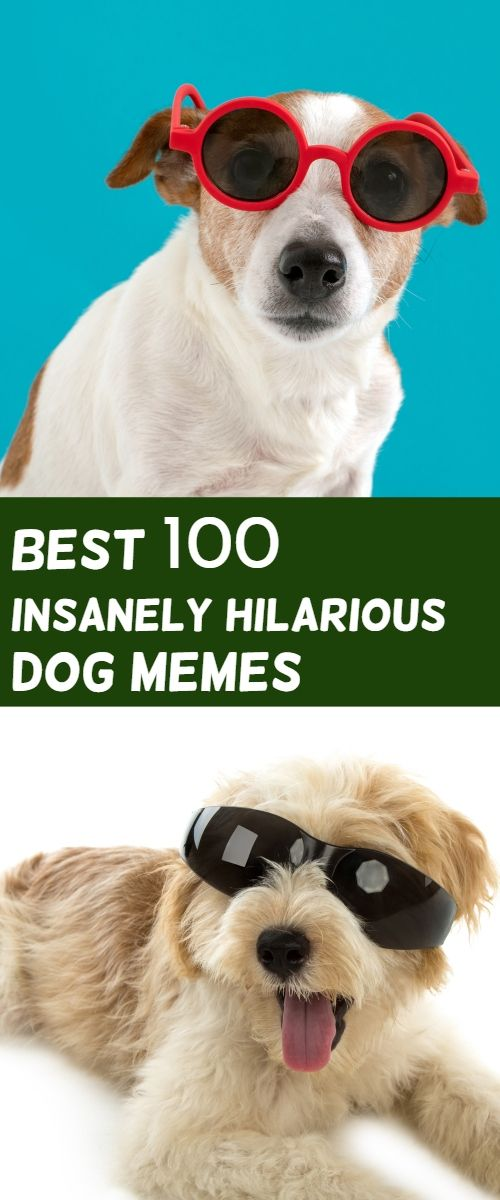 Dog Memes Humor Funny Labrador Do You Love Dogs Well You Will