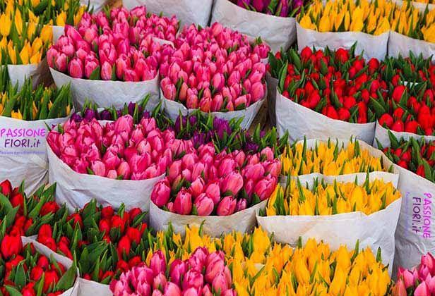 Finalmente Iniziano a Fiorire i Tulipani, IN OFFERTA sul nostro sito passionefiori.it puoi acquistare direttamente a casa tua, 10 Tulipani a solo 5,99 €