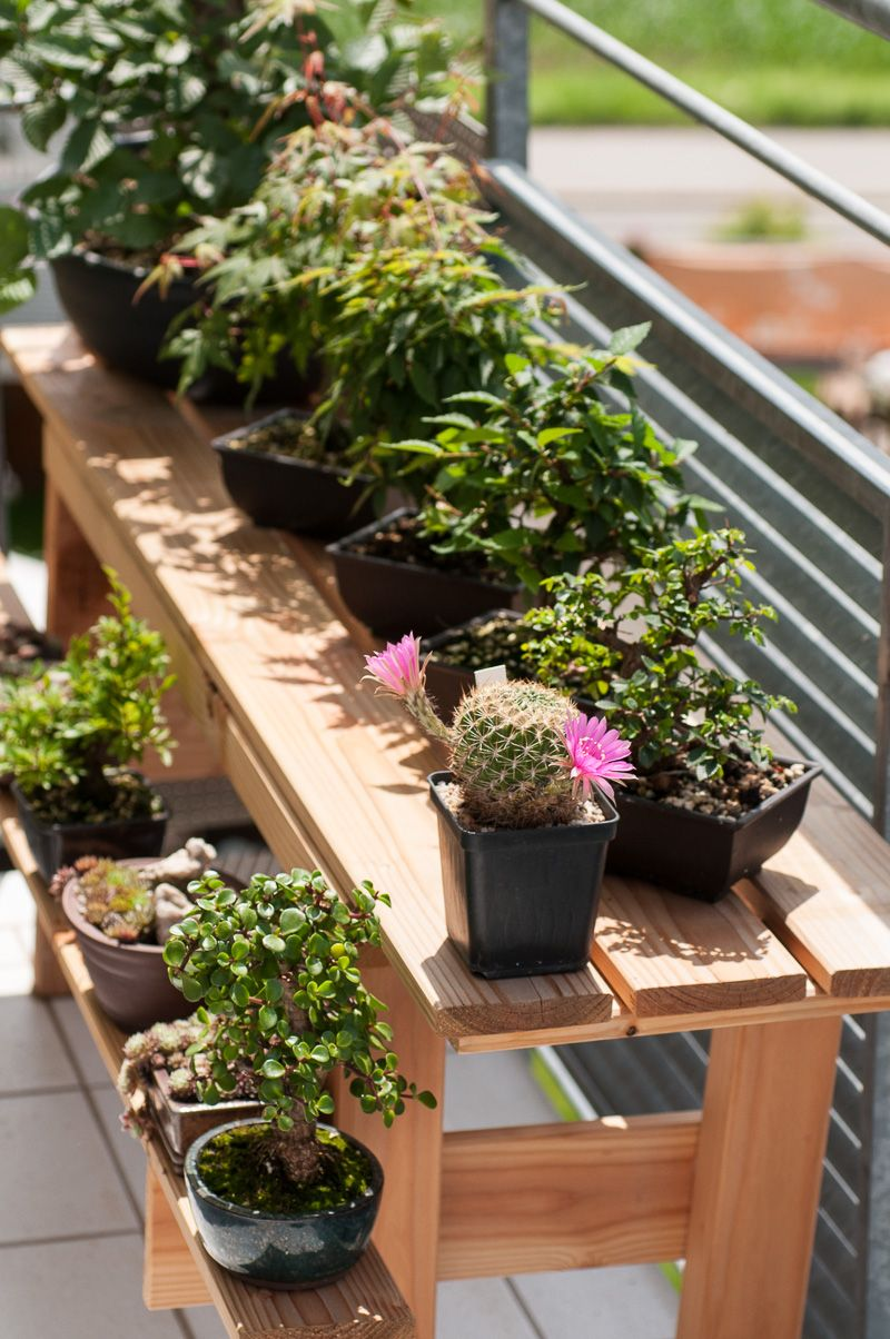 sommer auf dem balkon bonsai b ume pinterest der balkon balkon und sommer. Black Bedroom Furniture Sets. Home Design Ideas