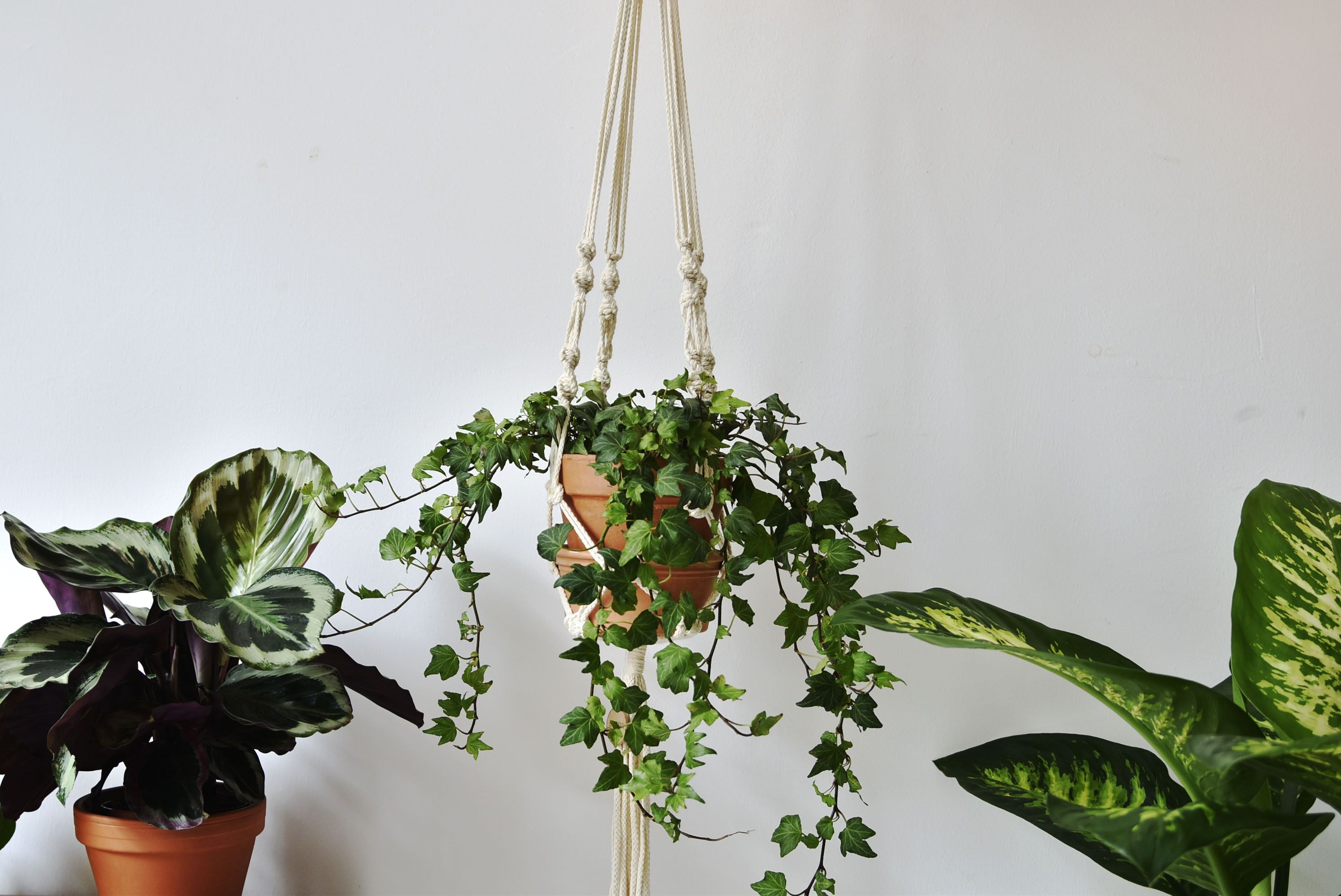 Macram Plant Hanger Elsa