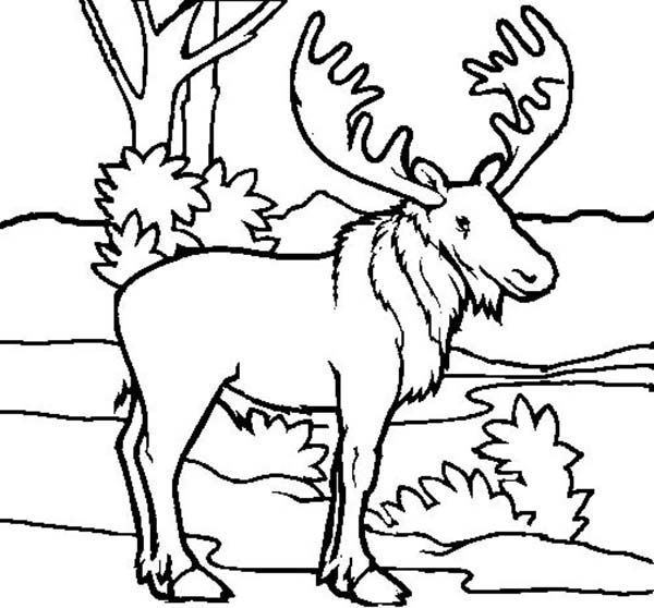 Picture Of Moose Coloring Page Kids Play Color Moose Pictures Kids Coloring Book Coloring Book Pages