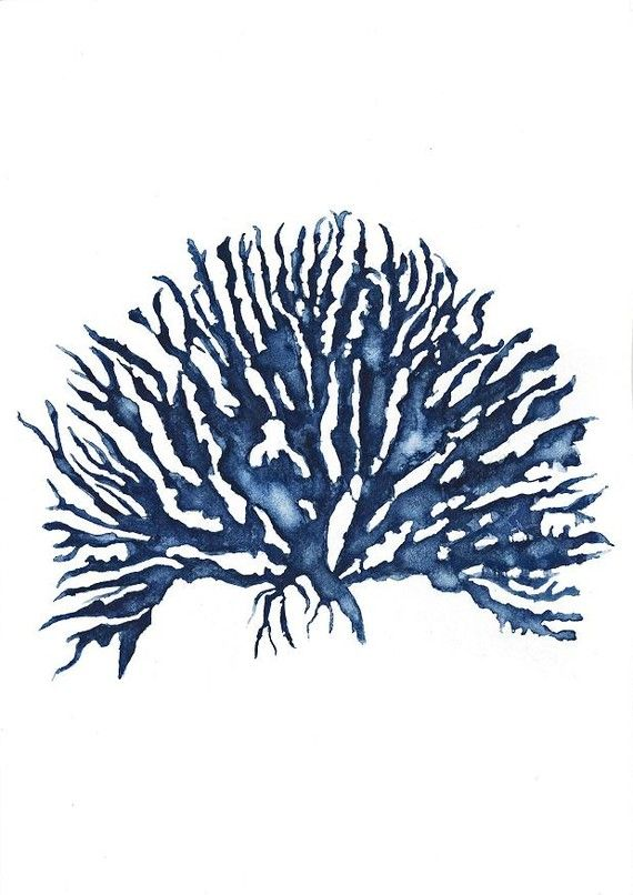 Sea Coral Iv In Denim Blue Watercolor Print 11x14 Blue