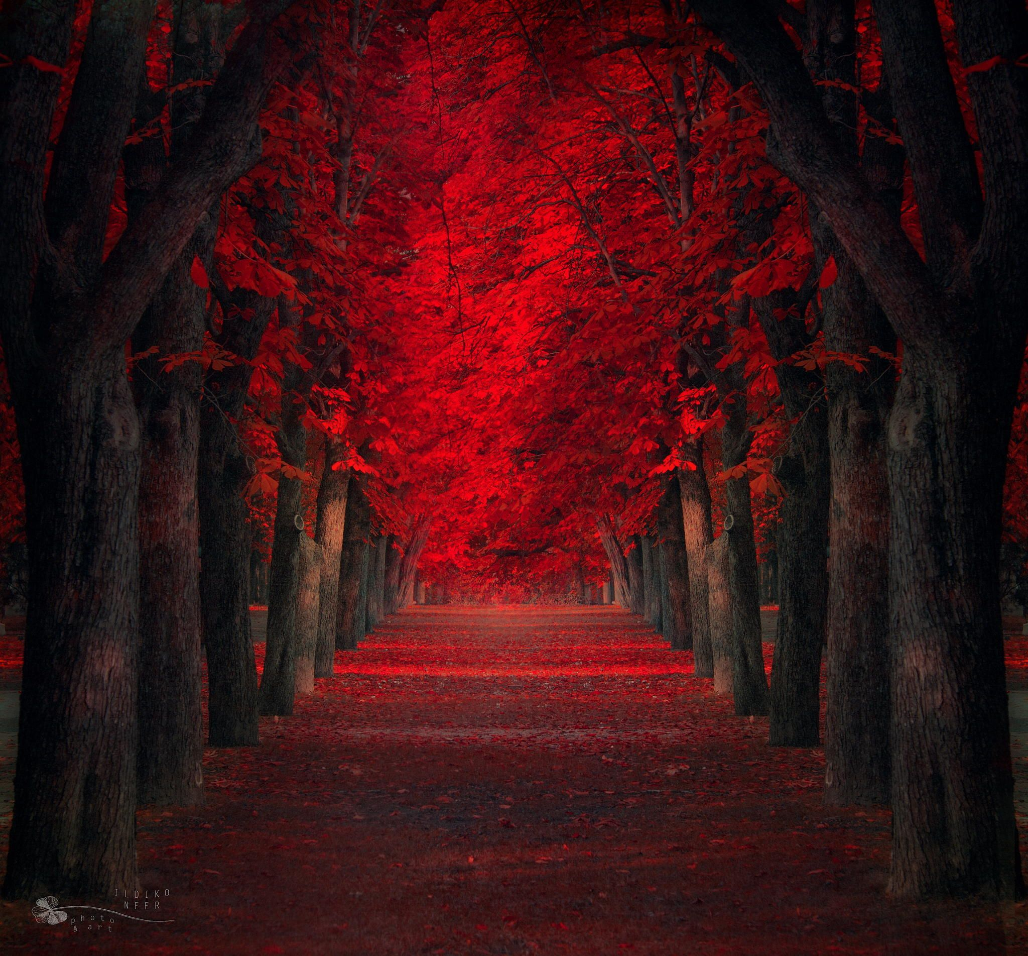 Photograph Endless Passion by Ildiko Neer on 500px