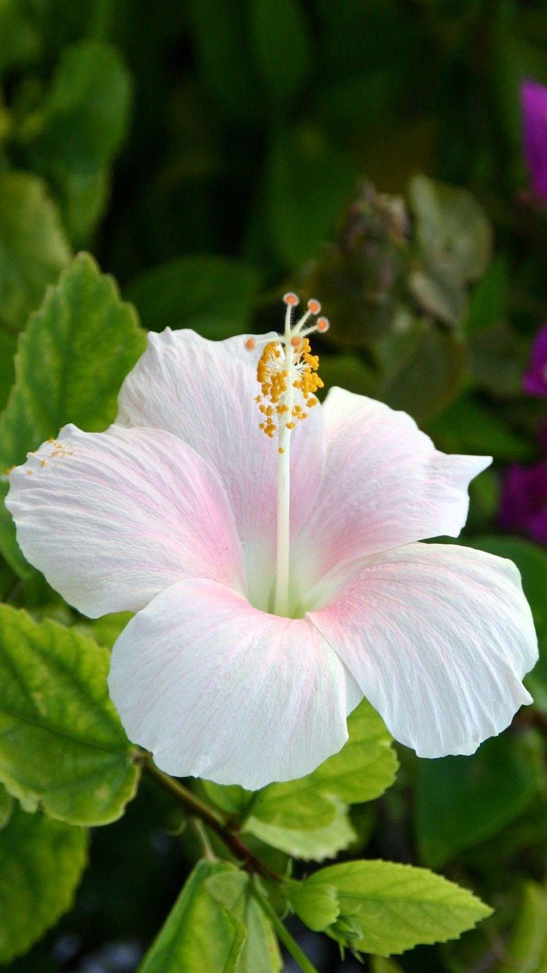 15 beautiful hibiscus flowers pinteres 15 beautiful hibiscus flowers more dhlflorist Image collections