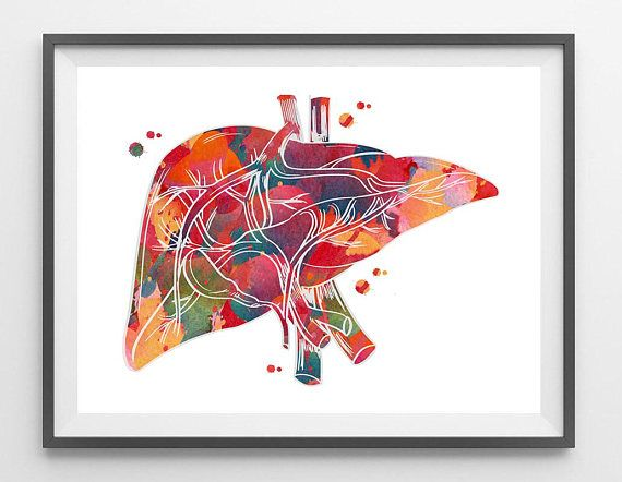 Human Liver Anatomy Watercolor Print Medical Art Illustration