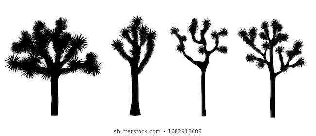 Best Joshua Tree Silhouettes Google Search Tree Silhouette Tree Tattoo Joshua Tree
