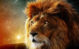 You searched for Lion | Live Wallpaper HD | Leon de judah ...