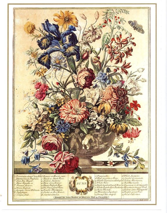 Complete Set 12 MONTH of FLOWERS Art Prints , 1700s
