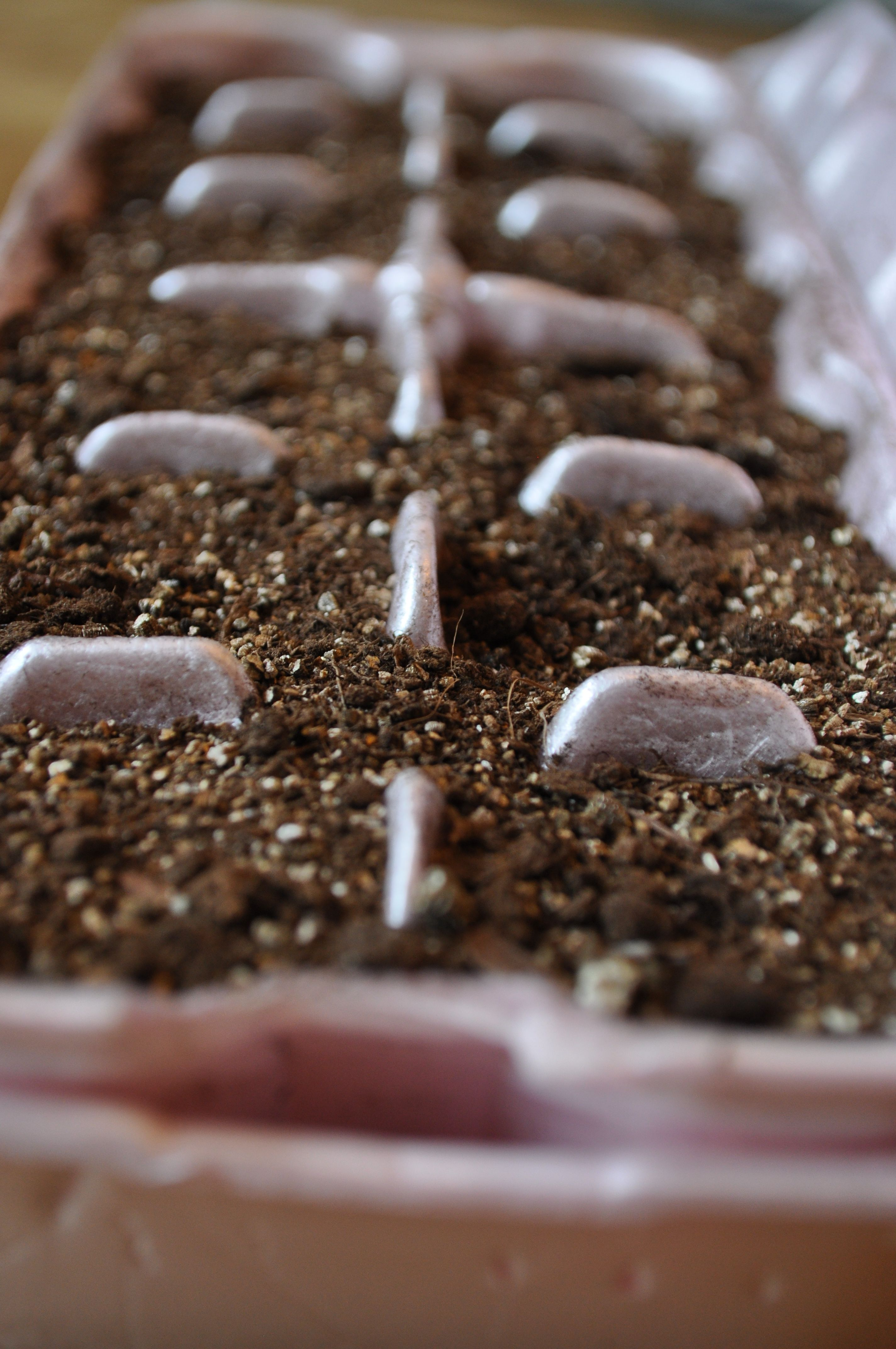 Simple Fun For Young Green Thumbs Egg Carton Gardening