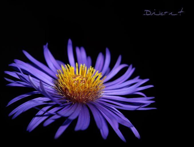 flower 047 by discret