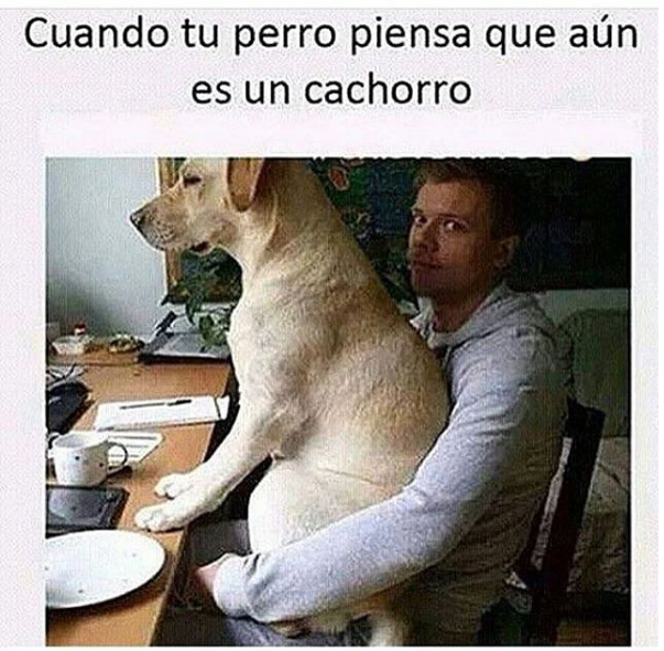 Memes Chistes Humor Funny Invequa Perro Perros Memes En Espanol Memes De Perros Memes Marvel Memes Memes Funny Memes