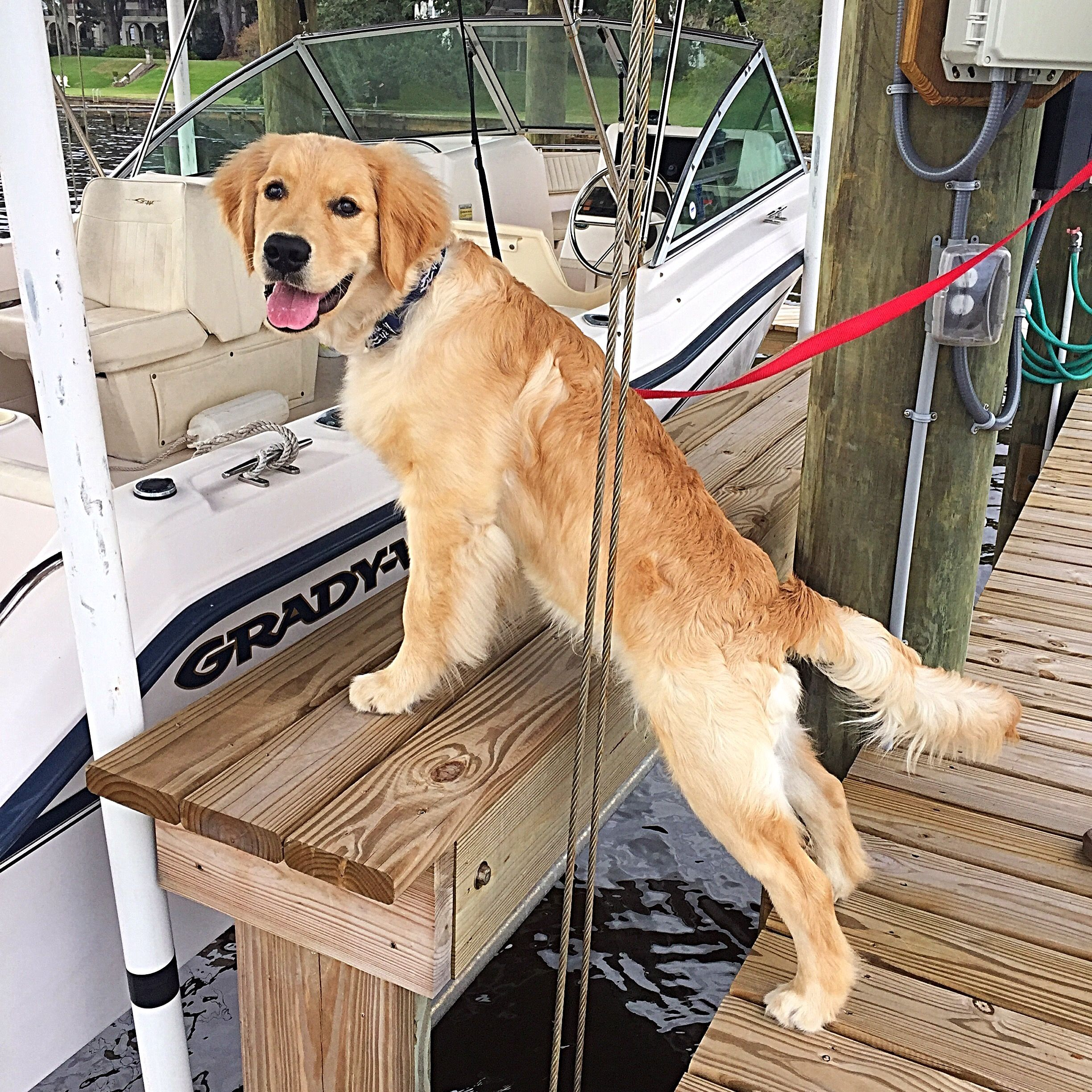 Grady White Boating With Golden Retriever Puppygoals Boating