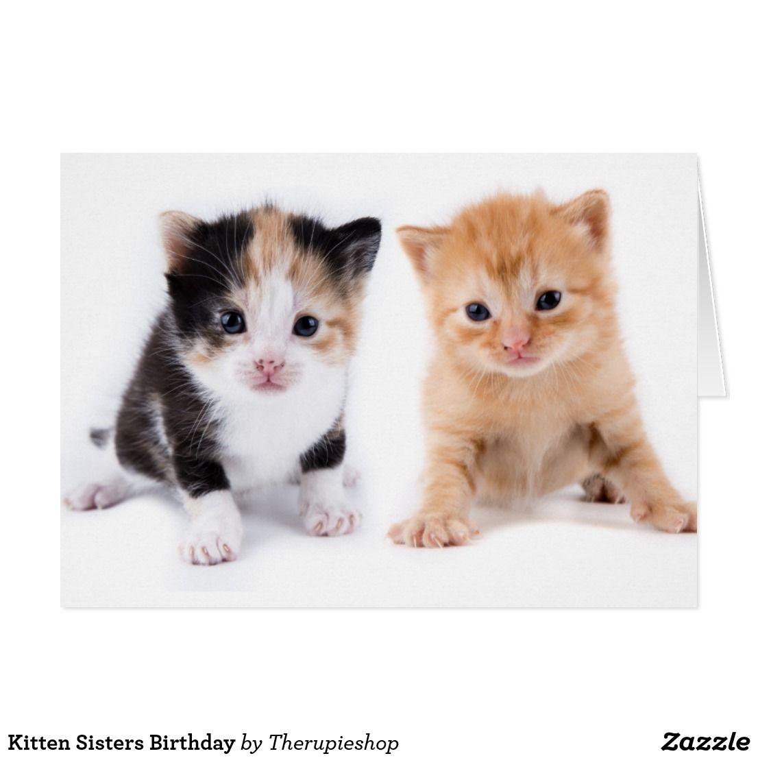 Kitten Sisters Birthday Card Zazzle Com Sister Birthday Card Cat Birthday Card Baby Cats