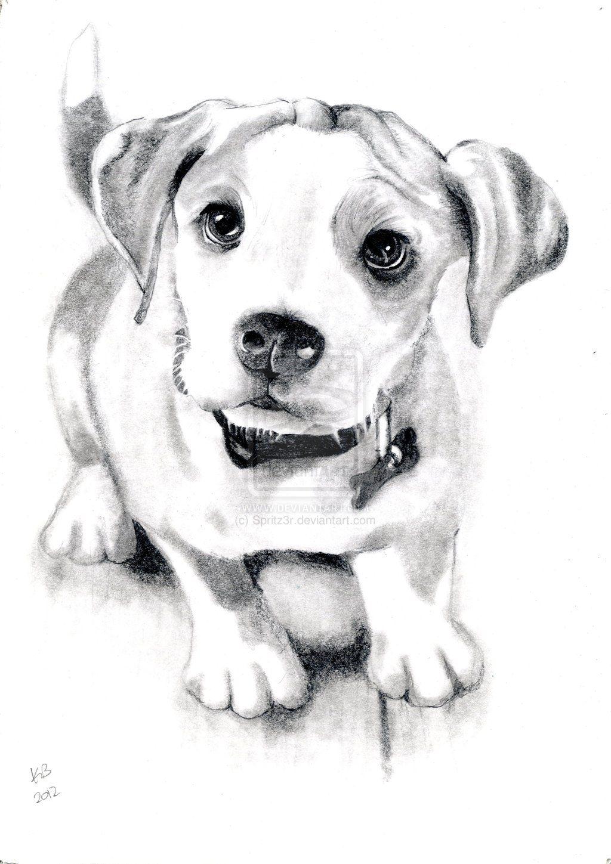 Dog Sketch By Spritz3r Deviantart Com On Deviantart Dog Sketch