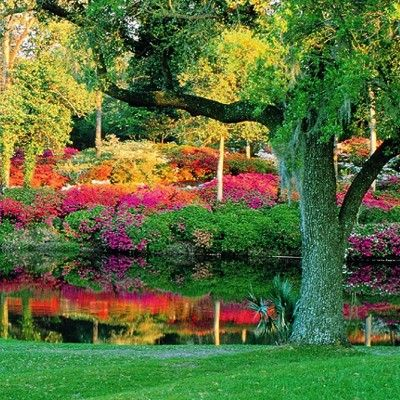 d092da3ce7506161018deb1380283cd8 - Magnolia Plantation And Gardens Dog Friendly