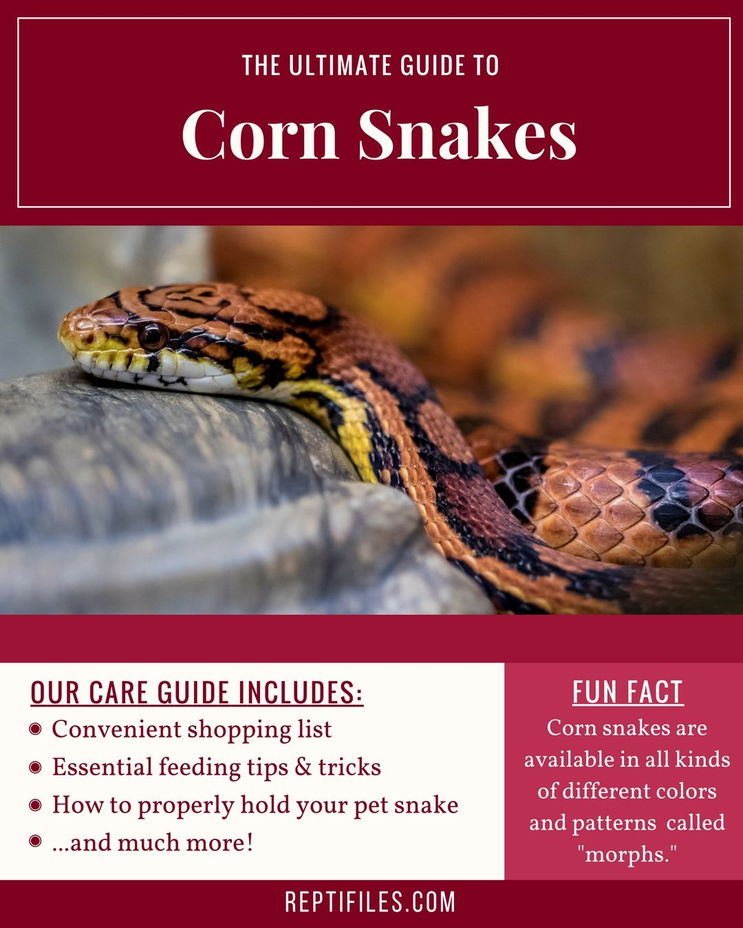 Corn Snakes Are A Nonvenomous Terrestrial Species Of Constricting Snake Native To The Southeastern United States Parts Of Mexico A Corn Snake Snake Pet Snake