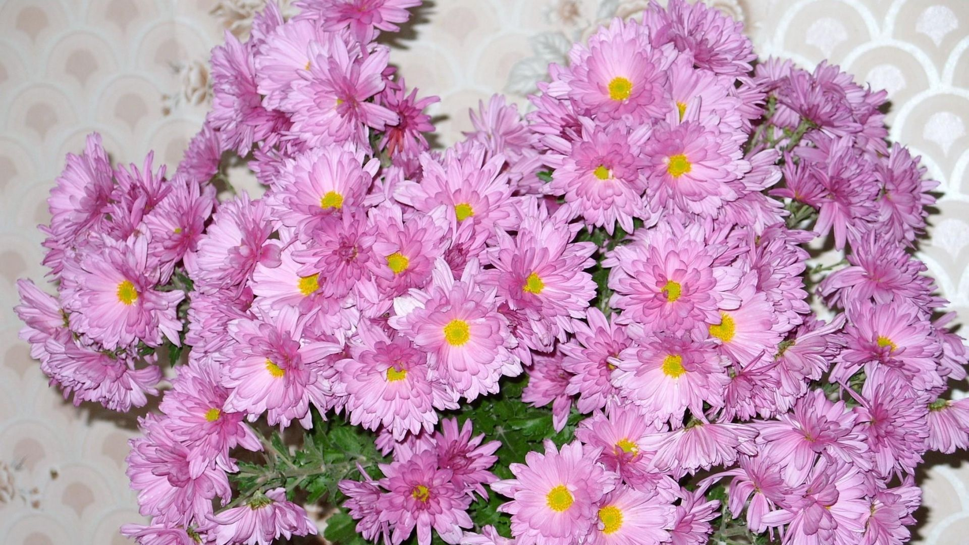 Stunning Aster Flowers Bouquet Wall Hd Images Wallpaper