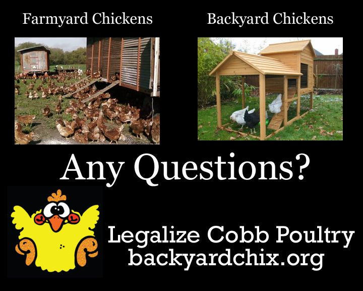 Working to allow raising chickens in urban areas of Cobb County
