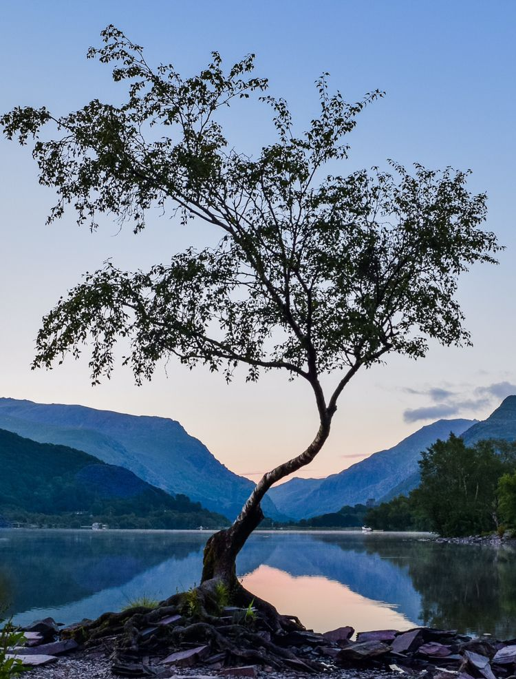 I got up at 4am to take the lone tree at sunrise. Llyn Padarn, North Wales. [2365 x 3107] - Nature/Landscape Pictures #northwales