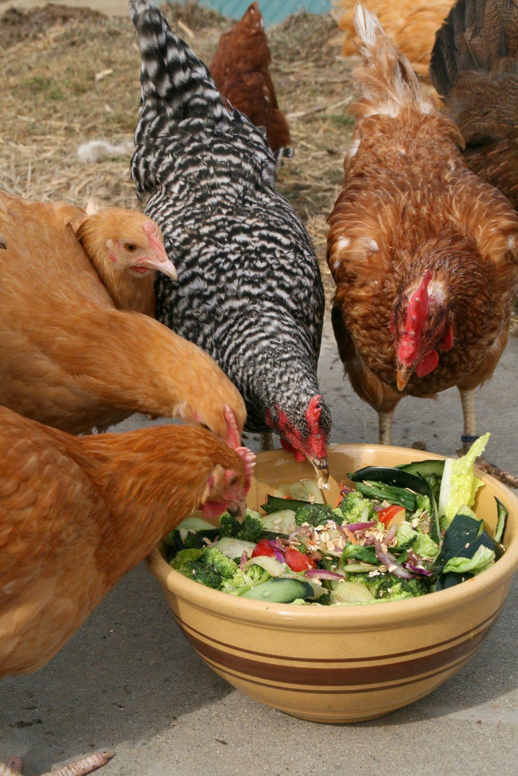 Chickens LOVE veggie scraps! Nummy
