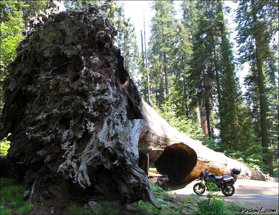 Sequoia National Park | Turismo en Fotos: Sequoia National Park