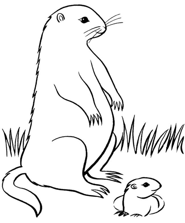 printable groundhog day coloring pages kids groundhog day cartoon coloring pages - Groundhog Coloring Pages Kids