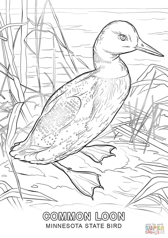 minnesota-state-bird-coloring-page.jpg (1020×1440) | Kolorowanki ...