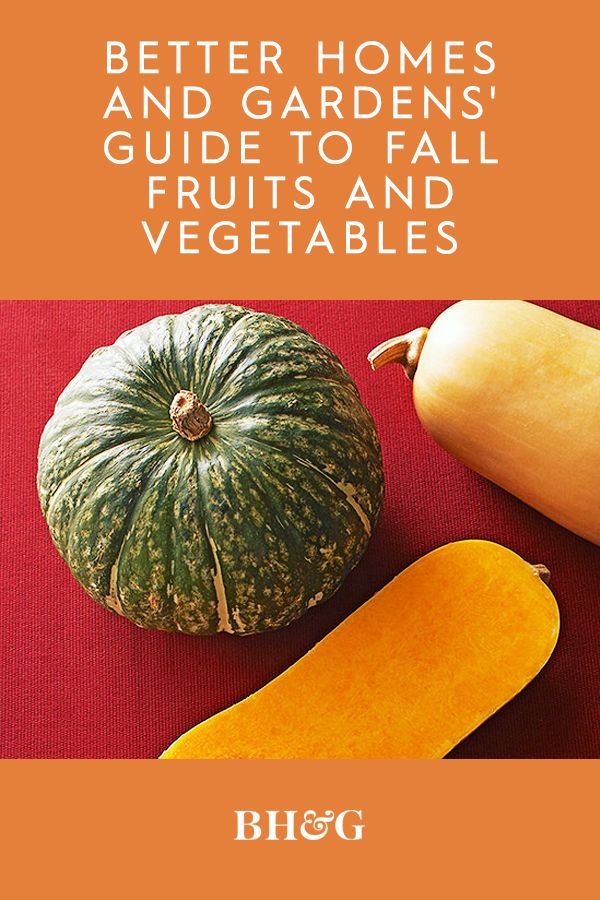 The flesh of popular fall squash varieties such as acorn, butternut, or delicata can be baked, boiled, roasted, and sauteed, and served as a side dish by itself or in soups, pastas, pies, or casseroles. #fallvegetables #growingfallvegetables #guidetofallvegetables #fallvegetablegarden #fallproduce #bhg