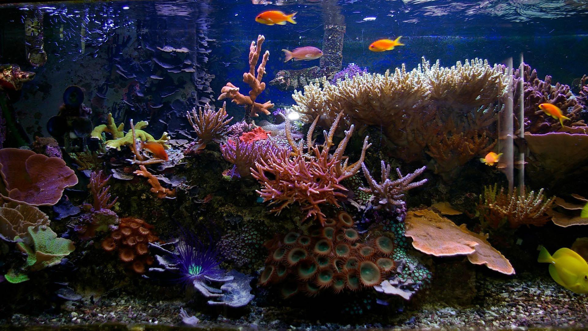 d096b9f1b1c032083f64e7277f21dce7 Frais De Aquarium Tropical Schème
