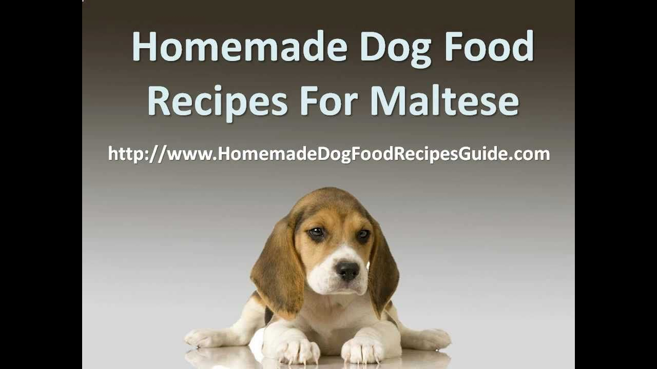 Homemade Dog Food Recipes For Maltese Dog Food Recipes Healthy