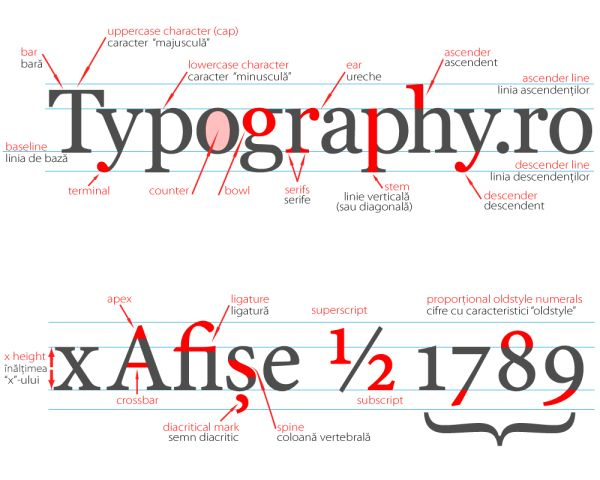 Typeface Anatomy Typeface Anatomy Describe Most Of The Graphic
