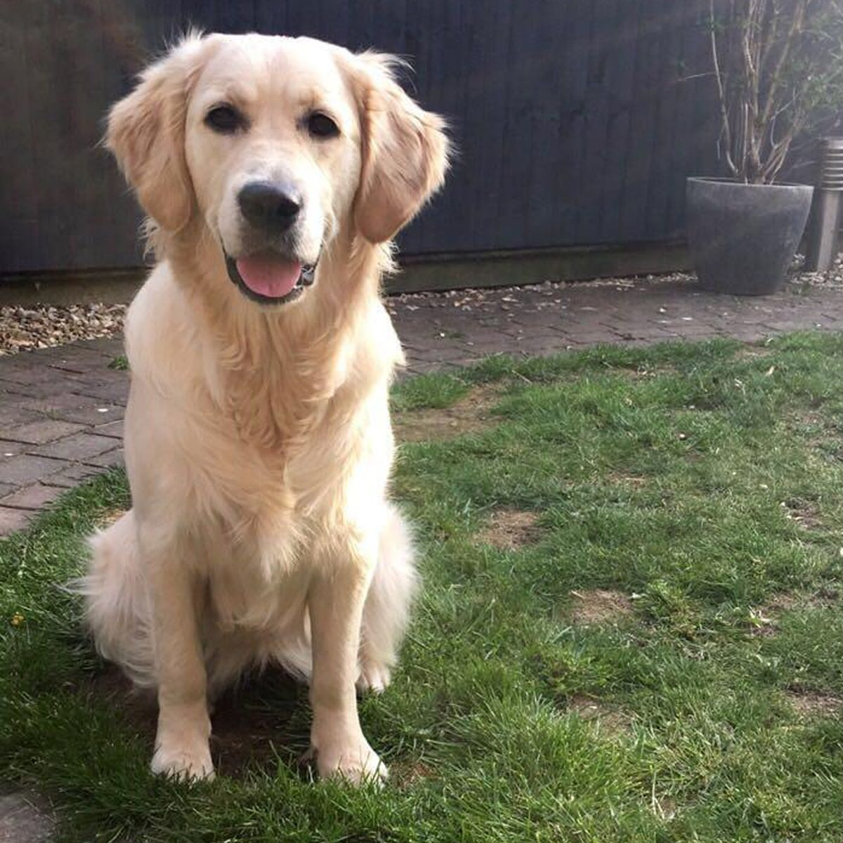 Newdoggysignup Ruby The Golden Retriever From Nottinghamshire Is
