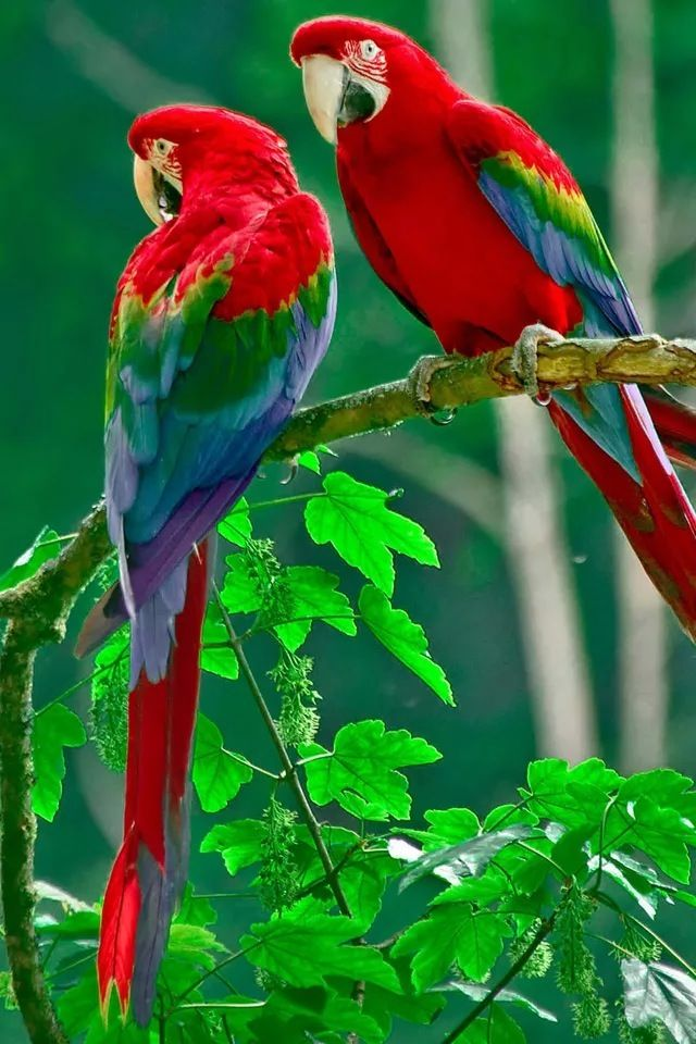 Parrot iphone wallpaper lovely animals pinterest beautiful parrot hd wallpapers that you will surely love voltagebd Images