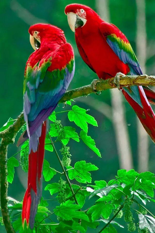 parrot iphone wallpaper lovely