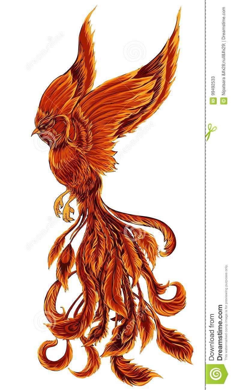 Phoenix Fire Bird Illustration And Character Design Hand Drawn Phoenix Tattoo Illustration About Firebird D Phoenix Tattoo Bird Illustration Phoenix Bird Art