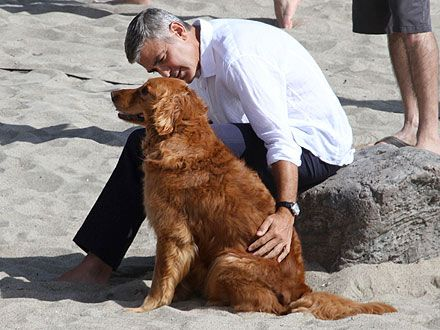George Clooney Goes Barefoot on the Beach with an Adorable Dog | George Clooney