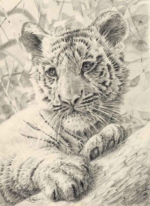 cute grayscale tiger cub   Coloring )))   Pinterest   Colorear