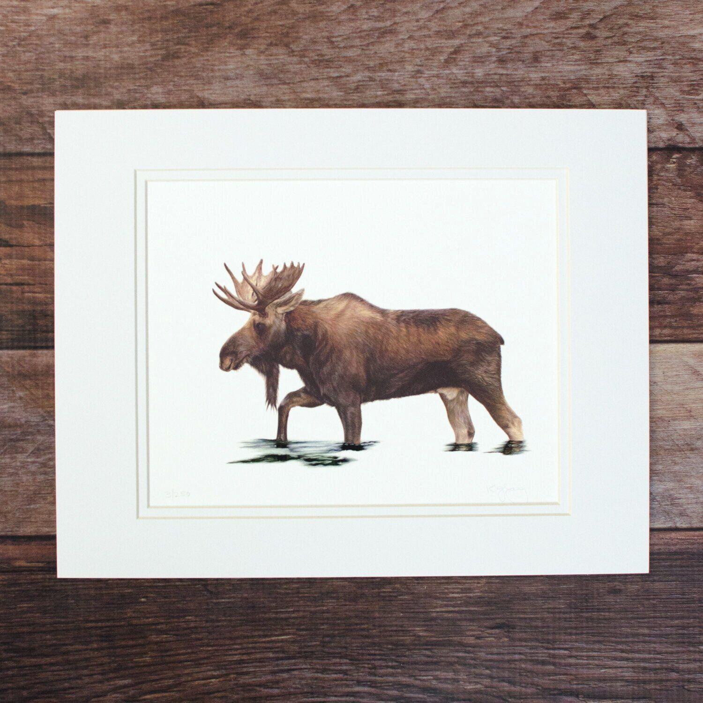 Moose Reflections | Limited Edition Illustration Print- Kit Gray illustration. #kitgray #illustration #customportrait #mooseportrait #pastelart #pastelportrait #mooseart #artist