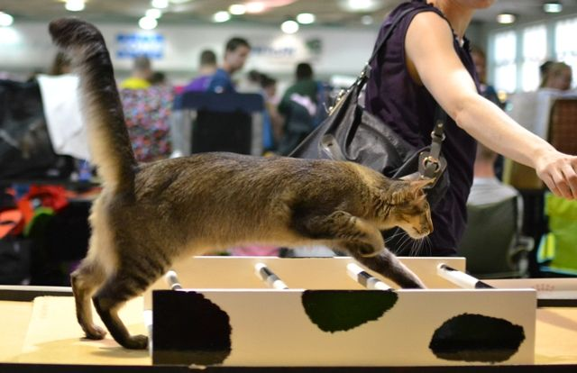 """Cat agility. Topeng News Flash of Noxx """"Victor"""""""