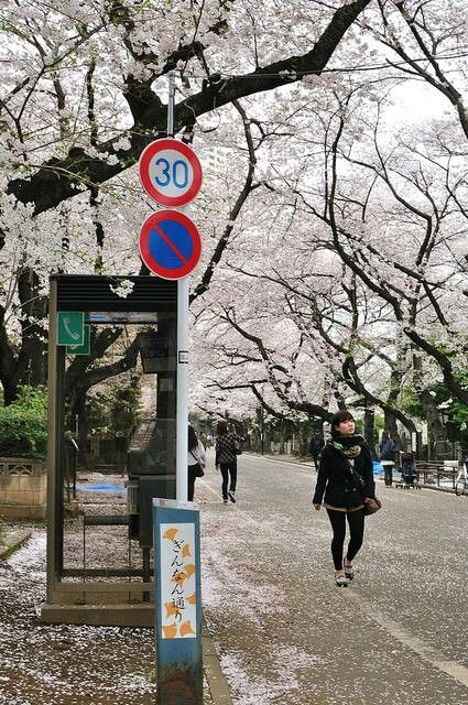 Calle de Japón en primavera