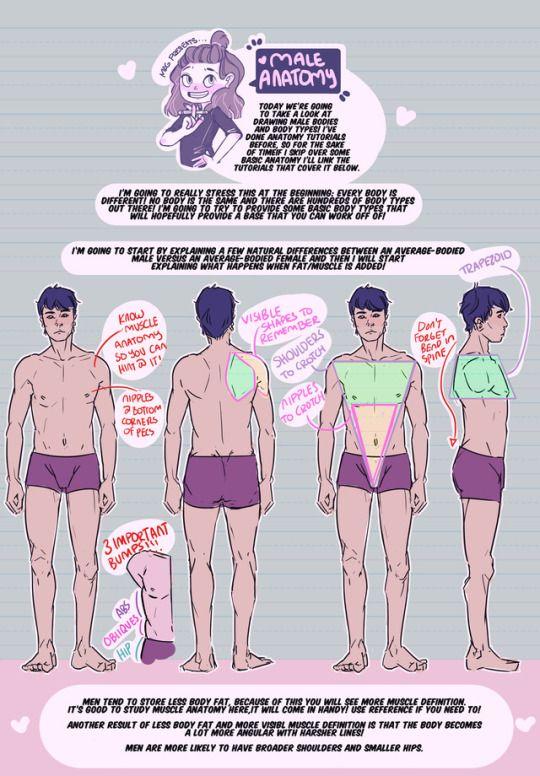 Male anatomy on thundercluck-blog.tumblr.com | Thundercluck ...