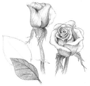 Rose pencil drawings i love pinterest drawings for Amazing drawings of roses
