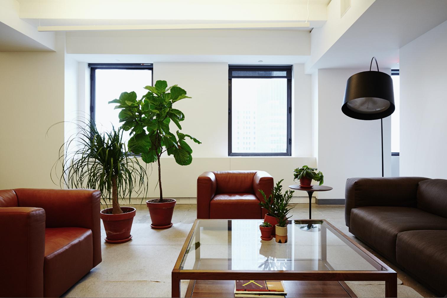 Designing Breathtaking Office Plant