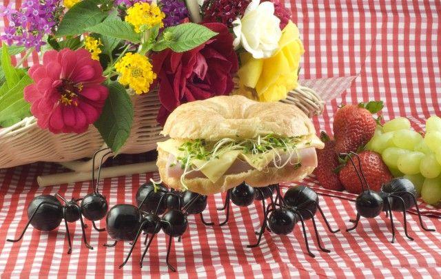 Rimedi naturali contro le formiche natural styles and for Rimedi naturali contro le formiche bicarbonato