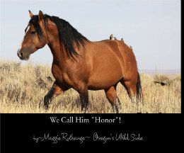 We call him honor by Maggie Rothauge
